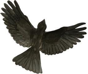 bird watercolor illustration black isolated