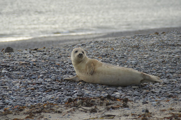 Young seal on beach