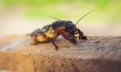 harmful insect, agricultural pest. pest control.