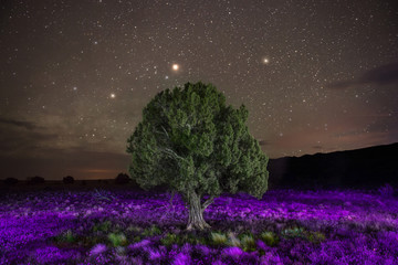 Majestic view of tree amidst flowering plants against star field