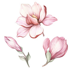 Set of blooming magnolia. Hand draw watercolor illustration.