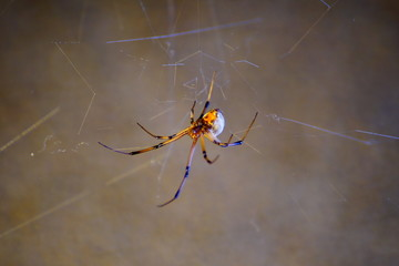 brown recluse 14