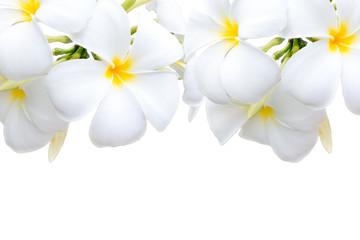 Poster Plumeria Plumeria flowers