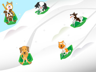 橇を楽しむ犬