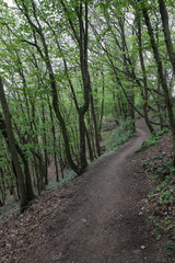 Fairytale forest trail