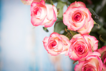 Blue background with pink roses with space for text