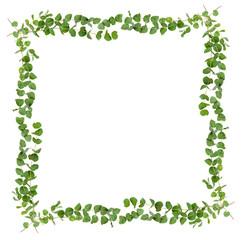 Decorative eucalyptus leaves frame