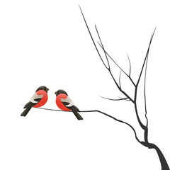 Christmas template with Two bullfinches sitting on branch isolated on white background