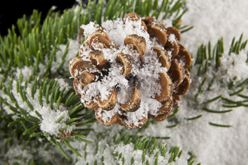 cones and branch of a tree in the snow close up