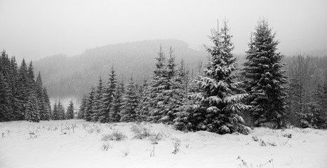 Winter forest in snow. Mountain landscape with a footpath. Sunny day and frosty weather