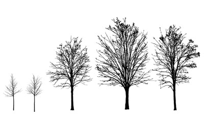 Set of vector silhouettes of trees without leaves in autumn and winter, isolated on background