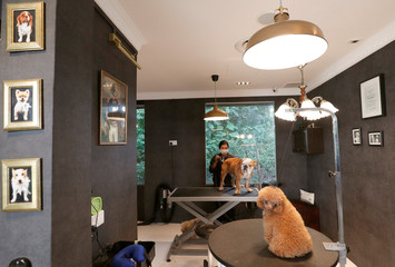 Dog picture adorn the grooming center of The Wagington luxury pet hotel in Singapore