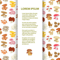 Flat poster or banner template with mushrooms. Vector illustration.