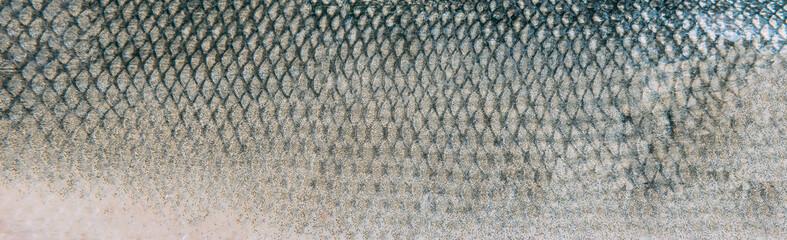 Fish skin texture pattern background