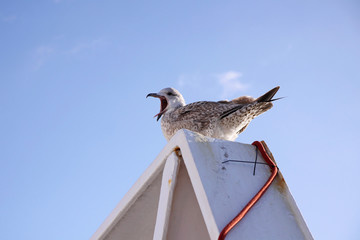 seagull on ferry