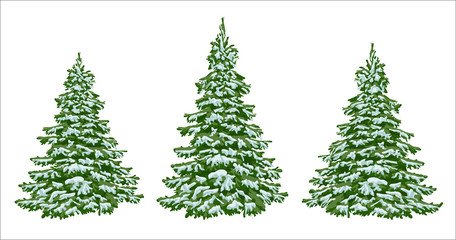 Firs in the snow. A set of Christmas trees with snow. Isolated. Festive decor. Drawing. Christmas.