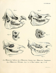 Illustration of a rhinoceros