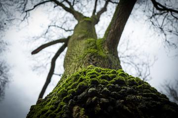 Green tree in Frankfurt Gruenburgpark