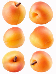 Collection of different apricot fruit isolated on white with clipping path