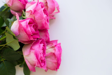 beautiful pink rose lie on white table