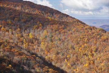 Autumn Falls In Shenandoah National Park, Virginia, Usa