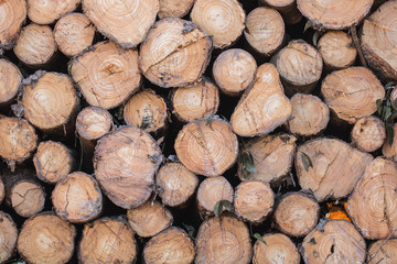 Keuken foto achterwand Brandhout textuur Stacked timber logs as background