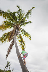 Girl climbing up a coconut tree