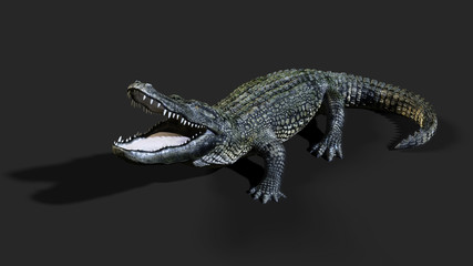 3D Illustration of a green American alligator isolated on grey background, American crocodile.