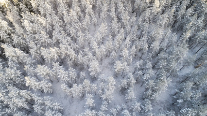 aerial view of beautiful winter forest
