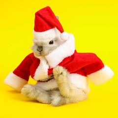 Christmas cute rabbit.