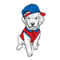 Puppy in a cap and shirt. Vector illustration for a postcard or a poster, print for clothes. Cute dog. Labrador. Clothes and accessories.