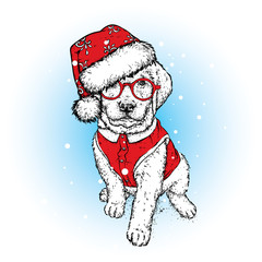 A beautiful puppy in a New Year's cap and a vest. Vector illustration. A pedigree dog in clothes and accessories. New Year's and Christmas.