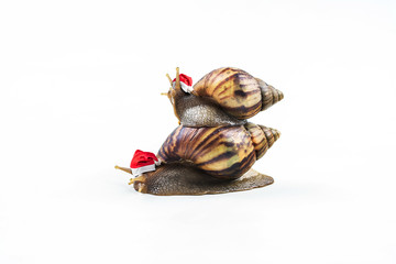 Christmas hat with snails on white background  ,Can convey the love of family or Love between mother and child