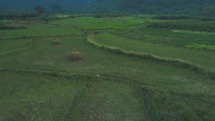 angshuo longsheng rice terraces