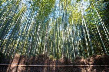 Bamboo Forest in Arashiyama, Kyoto