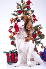 Dog with christmas tree. Christmas animal pet. Studio photo with white background and christmas tree ornaments. Cute puppy dog celebrate holiday. Pet photos.