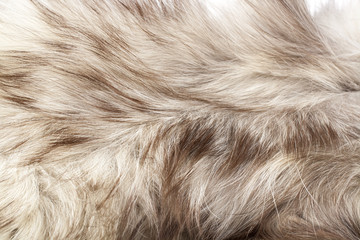 Silver fox real fur closeup. Fox wolf real fur texture pattern. Silver grey fur coat.