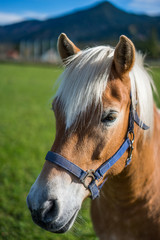 Horse Portrait In Germany