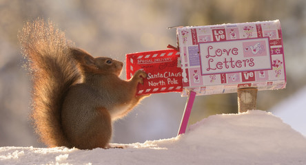 squirrel posting a christmas santa letter in snow