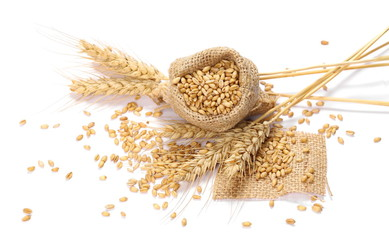 Ears of wheat and seeds in linen bag, jute sack isolated on white background