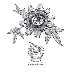 Medical plant passionflower.