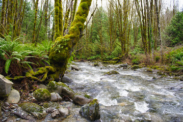 Old growth rain forest in Holland Creek trail in Ladysmith, Vancouver Island, British Columbia, Canada