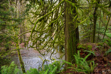 Old growth rain forest in Holland Creek trail in Ladysmith, Vancouver Island, Canada
