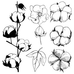 Hand drawn flowers. Cotton plant flower.Black and white line illustration of cotton flowers.