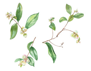 Set of small twigs with white berries and green leaves common snowberry (Symphoricarpos albus). Garden bush, Christmas decoration. Hand draw watercolor painting, botanical illustration, vintage