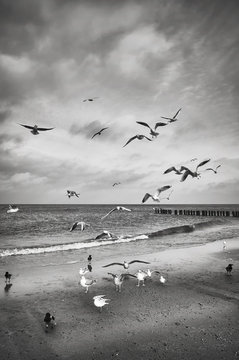 Black and white picture of birds on the beach.
