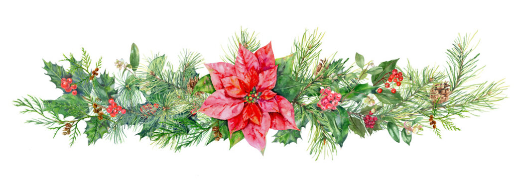 Panoramic view with pine branches, cones, holly berry, red poinsettia flower. Horizontal border for Christmas on white background, hand draw watercolor painting, botanical illustration, vintage