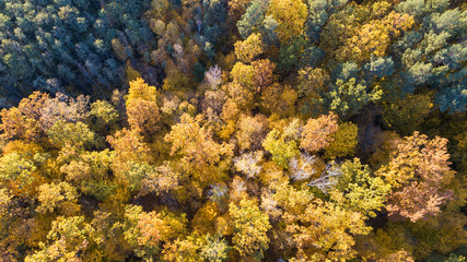 Aerial view of the forest with trees covered with yellow foliage, top view