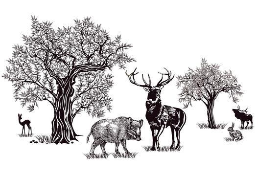 Hirsche und Wildschwein