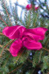 Rosa Schleife am Tannenbaum